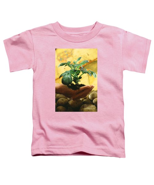 Potato Plant Toddler T-Shirt by Science Source