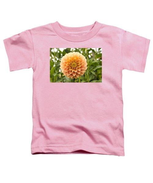 Sunny Dahlia Toddler T-Shirt
