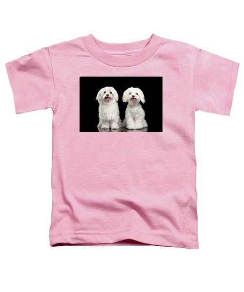 Two Happy White Maltese Dogs Sitting, Looking In Camera Isolated Toddler T-Shirt