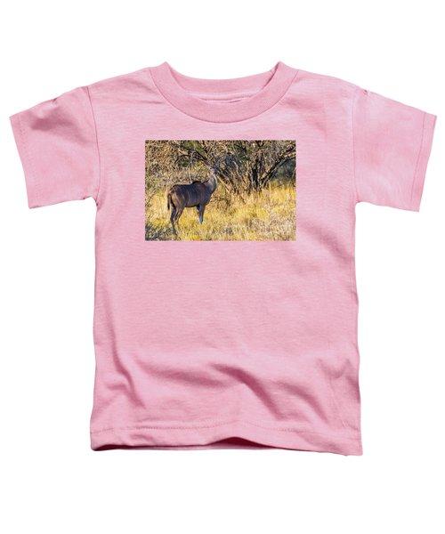 Kudu, Namibia Toddler T-Shirt