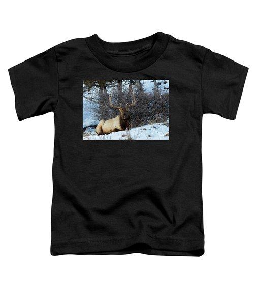 Rocky Mountain Elk Toddler T-Shirt