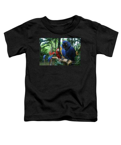 Aloha Kaua Aloha Mai No Aloha Aku Beautiful Macaw Toddler T-Shirt