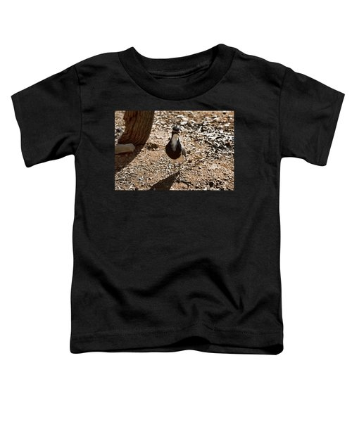 Banded Lapwing Toddler T-Shirt by Douglas Barnard