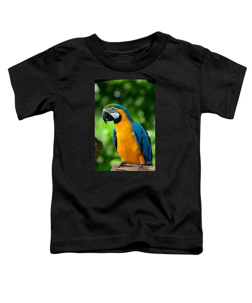 Blue And Yellow Gold Macaw Parrot Toddler T-Shirt