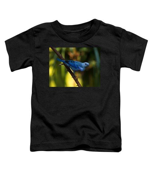 Blue Grey Tanager Toddler T-Shirt
