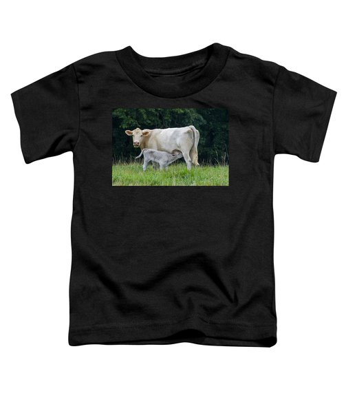 Charolais Cattle Nursing Young Toddler T-Shirt