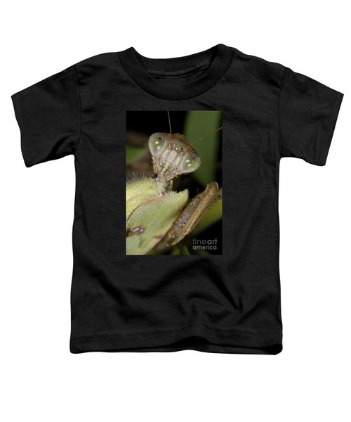 Chinese Mantid Eating A Sulfur Butterfly Toddler T-Shirt