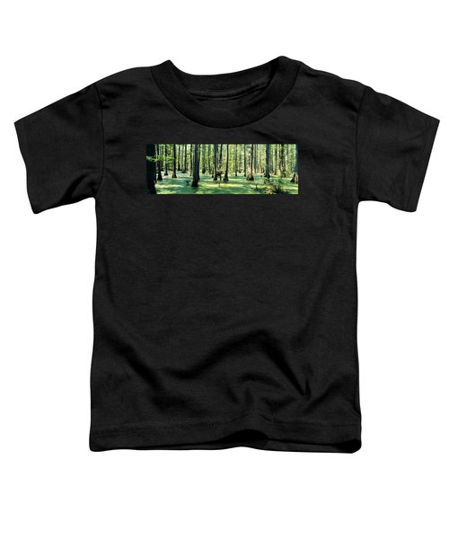 Cypress Trees In A Forest, Shawnee Toddler T-Shirt