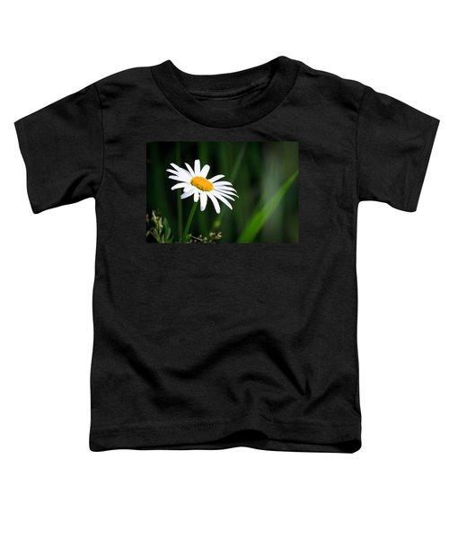 Daisy - Bellis Perennis Toddler T-Shirt