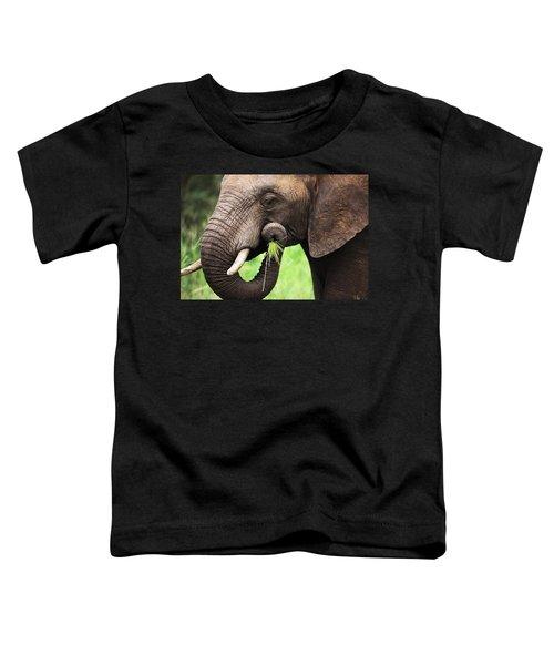 Elephant Eating Close-up Toddler T-Shirt