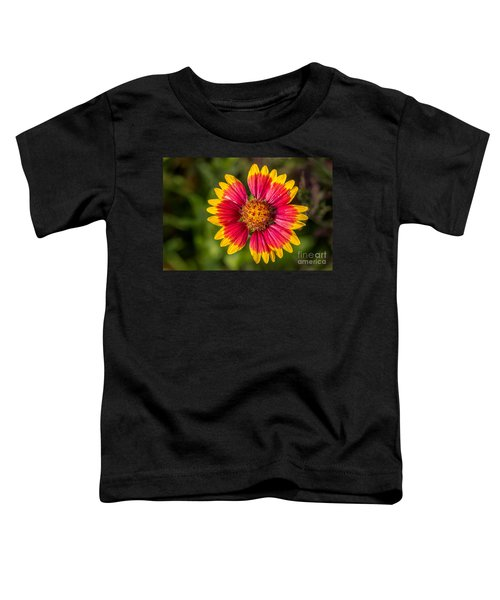 Gaillardia Shows Off Toddler T-Shirt