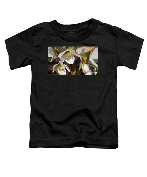 Helleborus Niger - Christrose Toddler T-Shirt