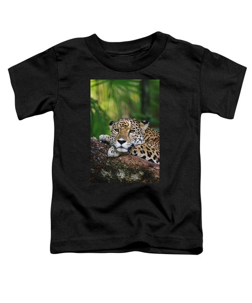 Jaguar Portrait Belize Toddler T-Shirt
