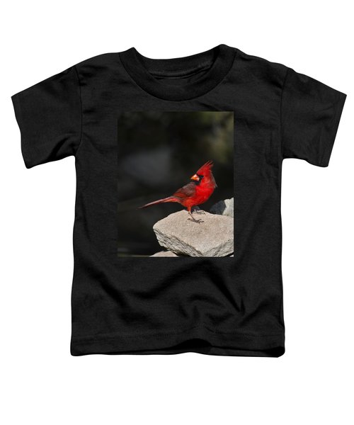 Male Cardinal Toddler T-Shirt by Gary Langley