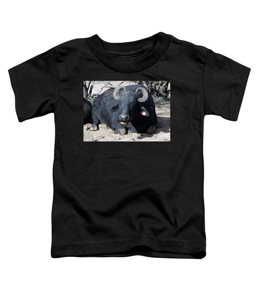 Out Of Africa  Water Buffalo Toddler T-Shirt