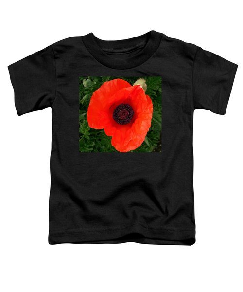Poppy Of Remembrance  Toddler T-Shirt