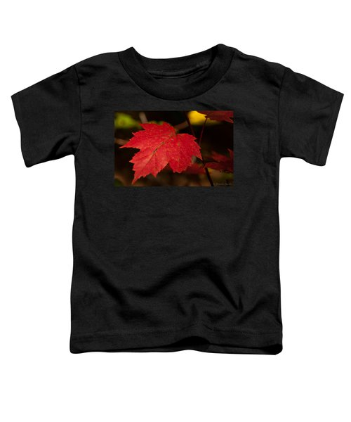 Red Maple Leaf In Fall Toddler T-Shirt