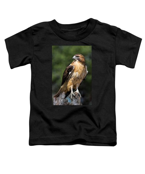 Red Tail Hawk Portrait Toddler T-Shirt