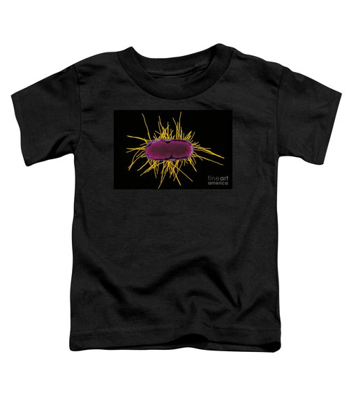 Sem Of E Coli Bacteria Toddler T-Shirt