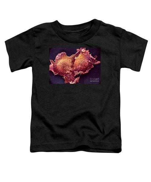 Sem Of Mitosis Toddler T-Shirt
