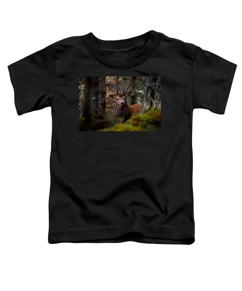 Stag In The Woods Toddler T-Shirt