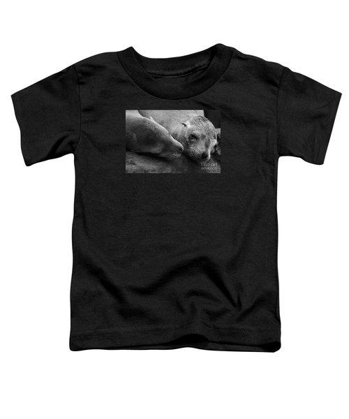 Whisker Love Toddler T-Shirt