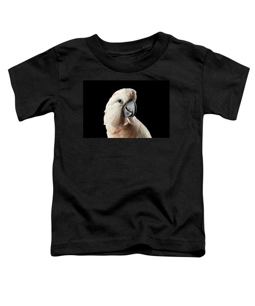 Closeup Head Of Beautiful Moluccan Cockatoo, Pink Salmon-crested Parrot Isolated On Black Background Toddler T-Shirt