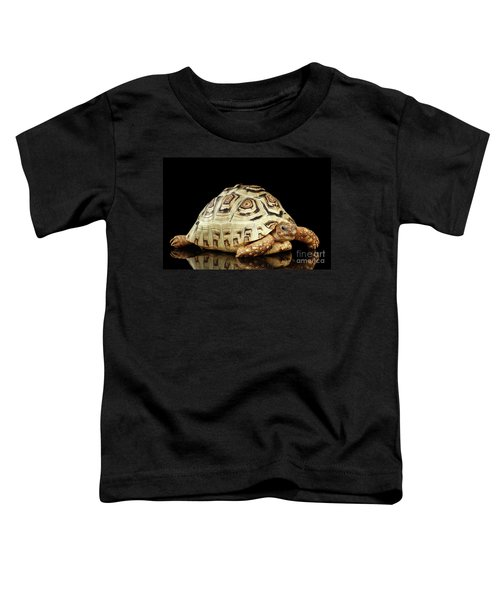 Closeup Leopard Tortoise Albino,stigmochelys Pardalis Turtle With White Shell On Isolated Black Back Toddler T-Shirt
