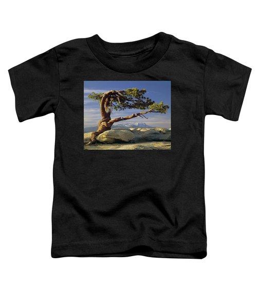 1m6701 Historic Jeffrey Pine Sentinel Dome Yosemite Toddler T-Shirt