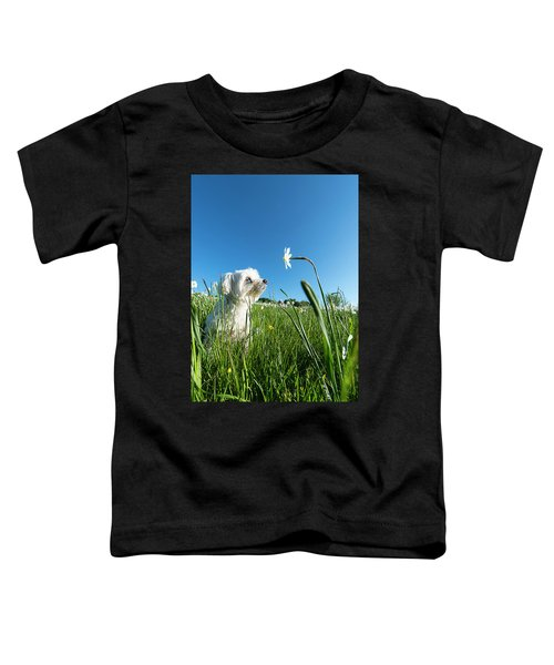 Blooming Daffodils In The Antola Park With Maltese IIi Toddler T-Shirt