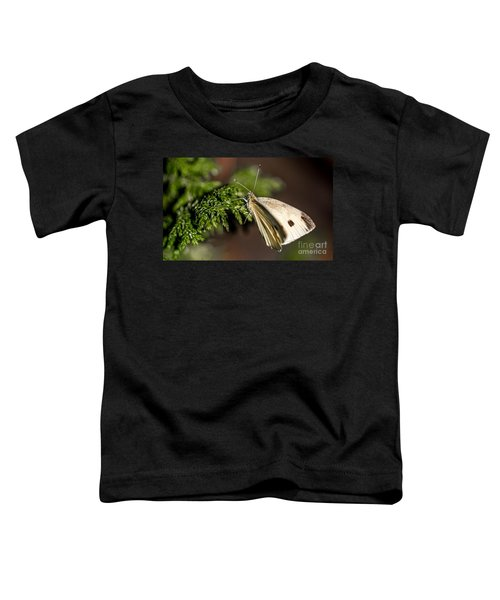 Cabbage Butterfly On Evergreen Bush Toddler T-Shirt