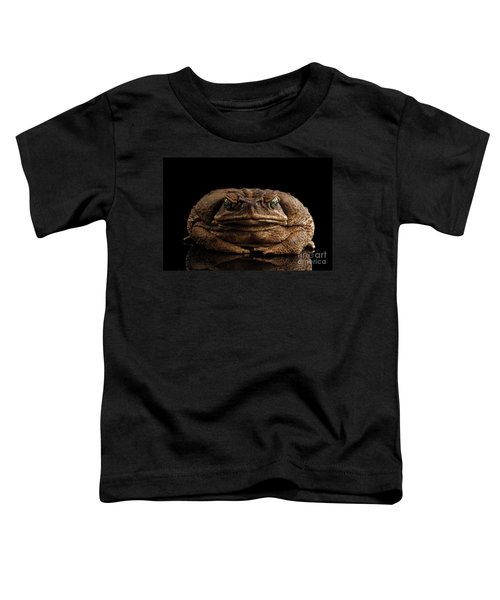 Cane Toad - Bufo Marinus, Giant Neotropical Or Marine Toad Isolated On Black Background, Front View Toddler T-Shirt
