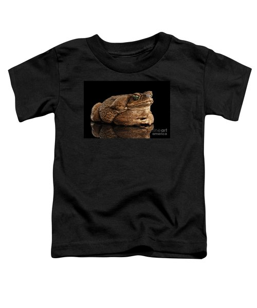 Cane Toad - Bufo Marinus, Giant Neotropical Or Marine Toad Isolated On Black Background Toddler T-Shirt
