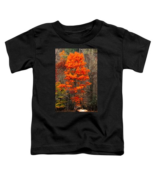 Cataloochee Color Toddler T-Shirt