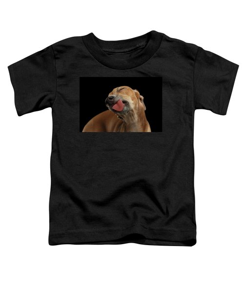 Closeup Cute Italian Greyhound Dog Licked With Pleasure Isolated Black Toddler T-Shirt