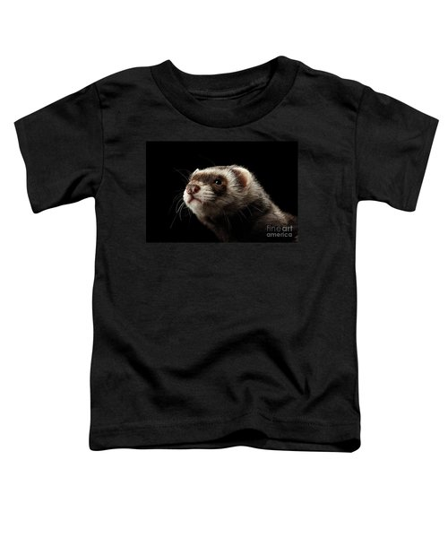 Closeup Portrait Of Funny Ferret Looking At The Camera Isolated On Black Background, Front View Toddler T-Shirt