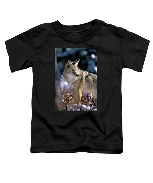 Coyote In Winter Light Toddler T-Shirt