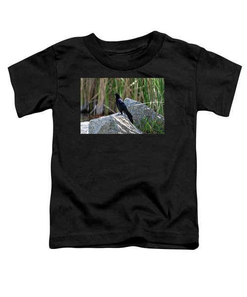 Great-tailed Grackle Toddler T-Shirt
