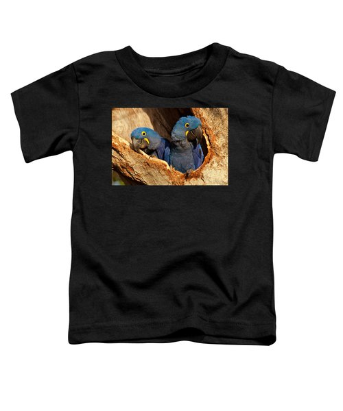 Hyacinth Macaw Pair In Nest Toddler T-Shirt