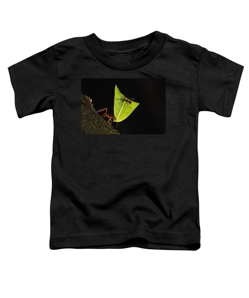Leafcutter Ant Atta Sp Carrying Leaf Toddler T-Shirt by Cyril Ruoso
