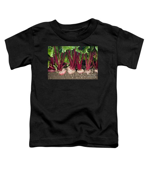 Organic Beets Toddler T-Shirt