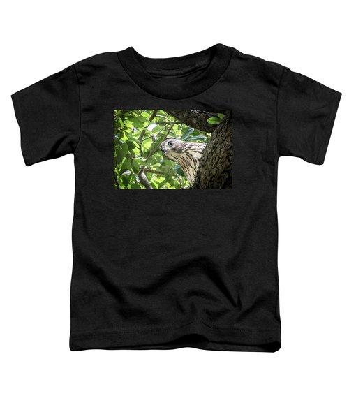 Red-shouldered Hawk Fledgling - 5 Toddler T-Shirt