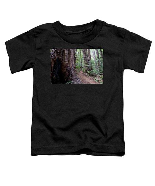 Pathway Through A Redwood Forest On Mt Tamalpais Toddler T-Shirt