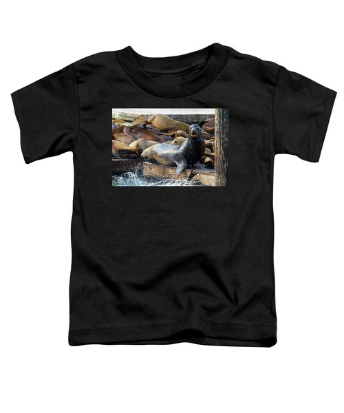 Sea Lions On The Floating Dock In San Francisco Toddler T-Shirt