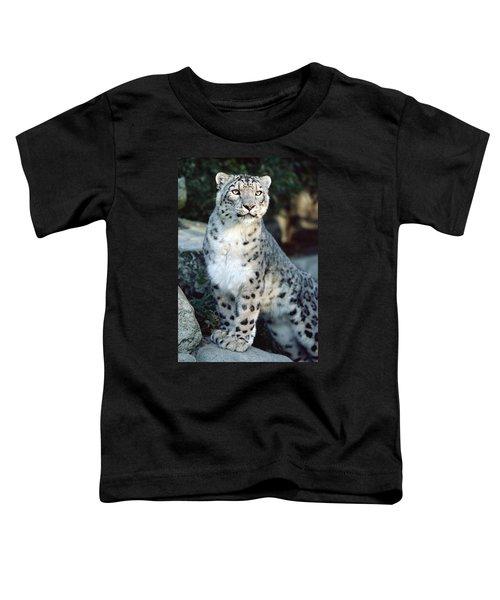 Snow Leopard Uncia Uncia Portrait Toddler T-Shirt