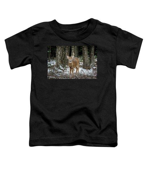 Staring Buck Toddler T-Shirt