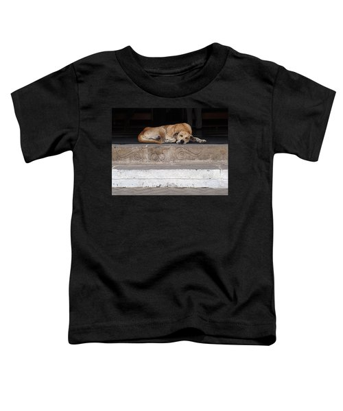 Street Dog Sleeping On Steps Toddler T-Shirt