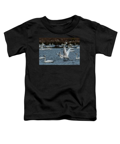 Toddler T-Shirt featuring the photograph Tundra Swan And Liftoff Head Start by Donald Brown