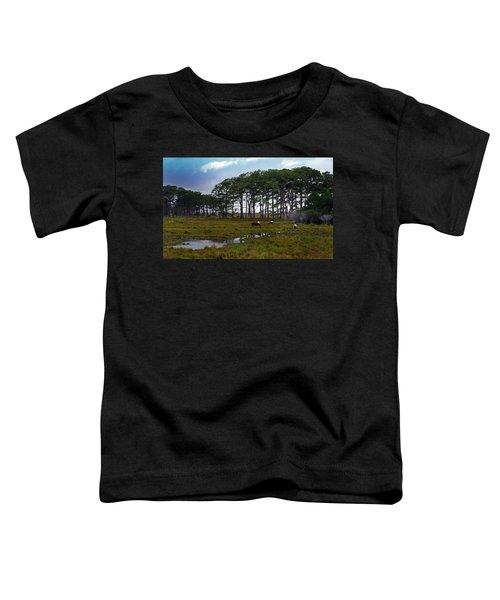 Wild Ponies Of Assateague Toddler T-Shirt