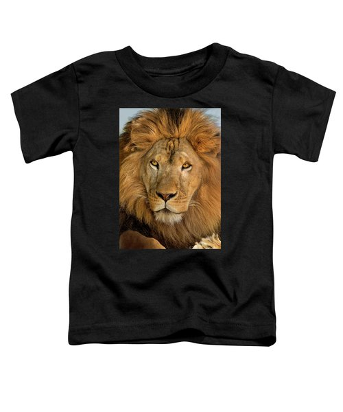 656250006 African Lion Panthera Leo Wildlife Rescue Toddler T-Shirt